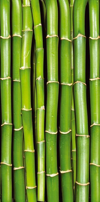 Samolepicí fototapeta Bambus D021 | 95 x 210 cm (Fototapeta na dveře 95 x 210 cm)