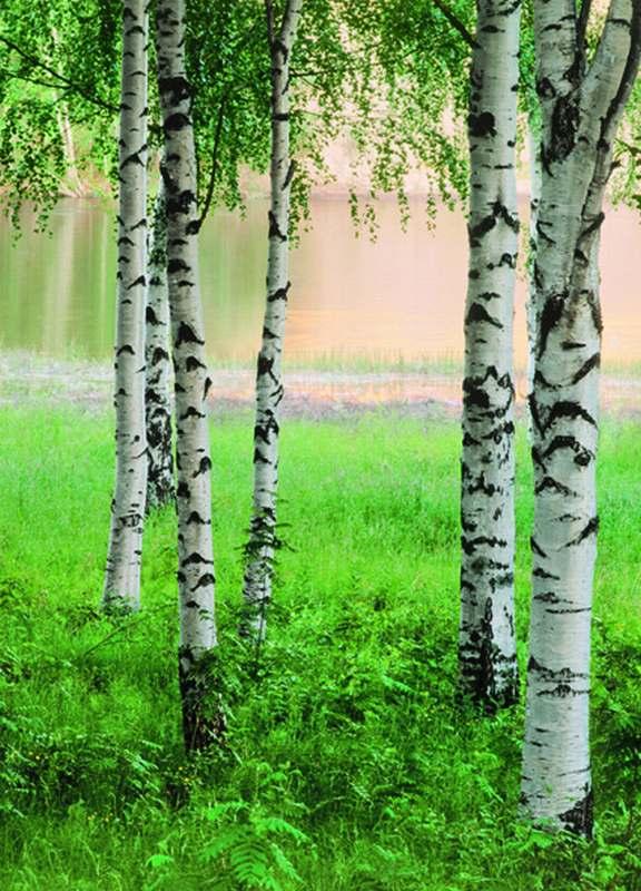 Fototapeta W+G Nordic Forest 381 | 183 x 254 cm (Papírová fototapeta 4-dílná)