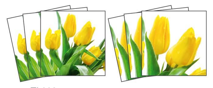 Samolepicí dekorace Tulips TI-008 (Dekorativní čtverce 15 x 15 cm)