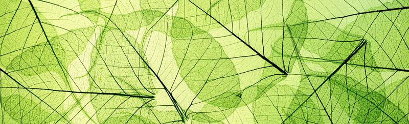 Běhoun na stůl Leaf TS-006 - 40 x 140 cm (Moderní ubrus | 100% polyester)