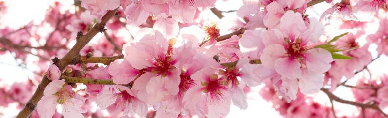 Běhoun na stůl Apple Blossom TS-012 - 40 x 140 cm (Moderní ubrus   100% polyester)