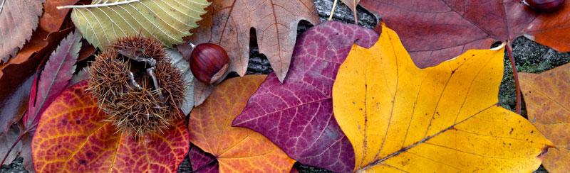 Běhoun na stůl Autumn TS-013 - 40 x 140 cm (Moderní ubrus   100% polyester)