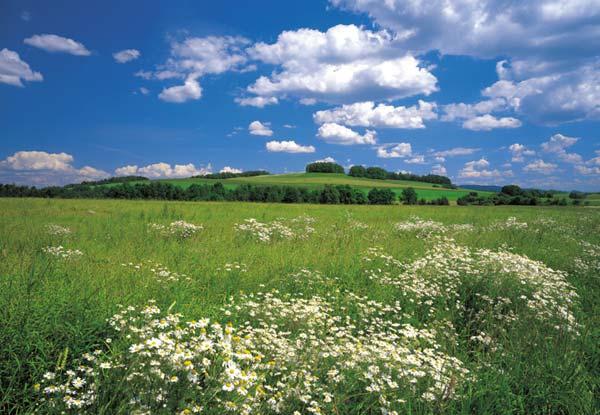 Fototapeta na zeď Meadow 8-254 (8-dílná fototapeta)