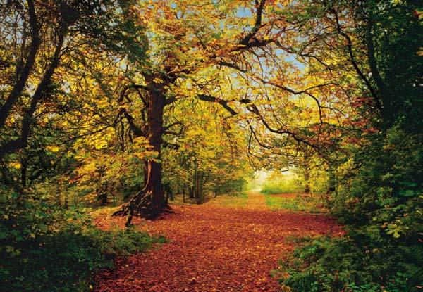 Fototapeta na zeď Autumn Forest 8-068 (8-dílná fototapeta)