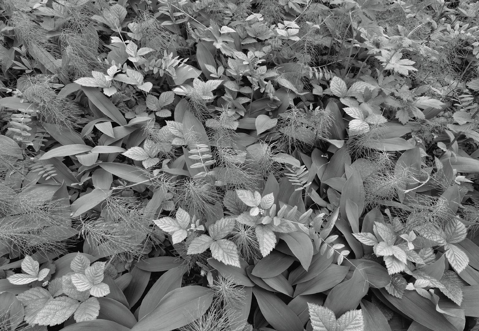 Fototapeta Forest Floor 8-914 (8-dílná fototapeta)
