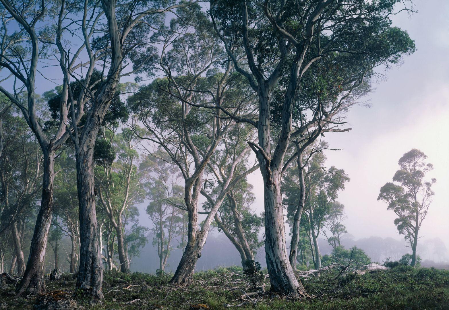 Fototapeta Fantasy Forest 8-523 (8-dílná fototapeta)