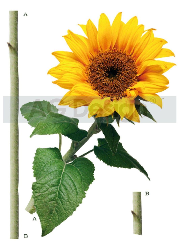 Samolepicí dekorace Slunečnice (Dekorativní nálepka 65 x 85 cm)