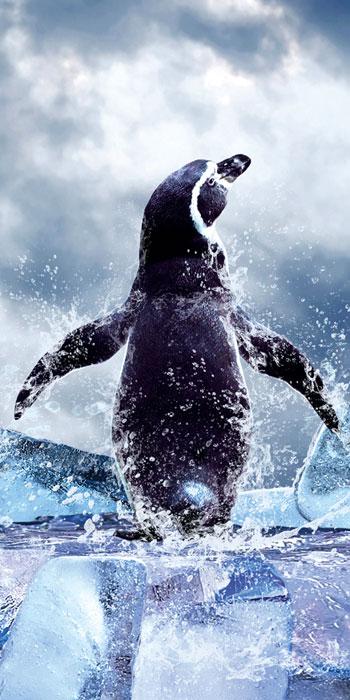 Fototapety na podlahu Dimex Penguin FL85-021 85x170 cm (1-dílná laminovaná fototapeta)