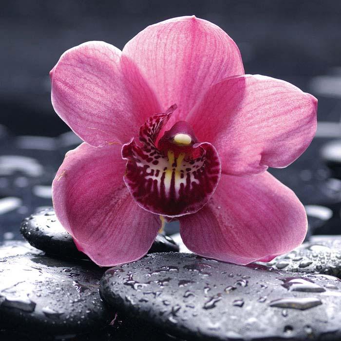 Fototapety na podlahu Dimex Orchid FL170-020 170x170 cm (2-dílná laminovaná fototapeta)