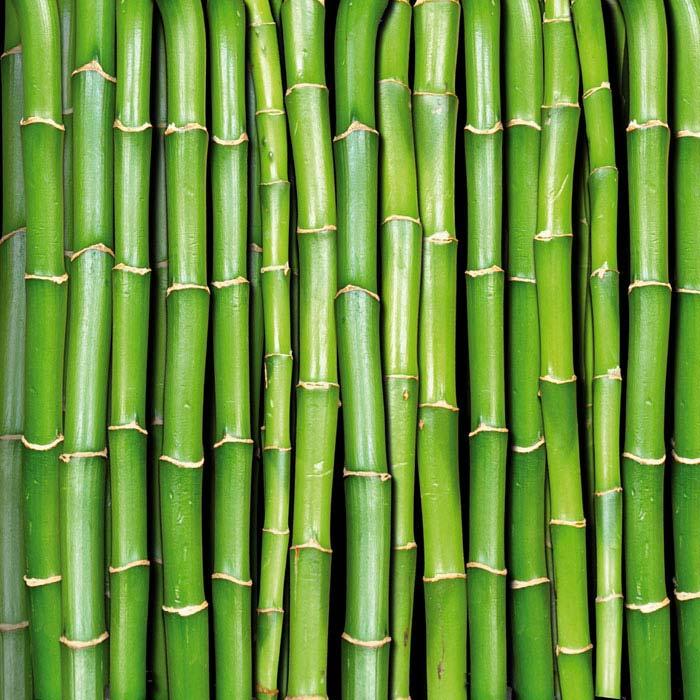 Fototapety na podlahu Dimex Bamboo FL170-031 170x170 cm (2-dílná laminovaná fototapeta)