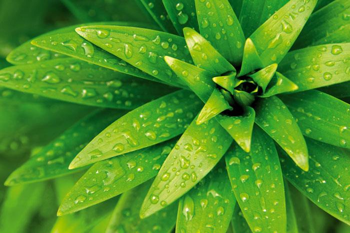 Fototapety na podlahu Dimex Froliage FL255-021 255x170 cm (3-dílná laminovaná fototapeta)